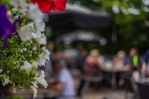 Flowers Summer Blurred Guests Bokeh Lunchtime